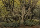 Watercolour of Pollard Hornbeams in Epping Forest