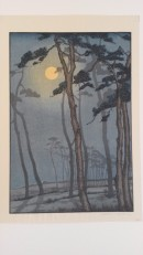 Moonlight behind tall trees